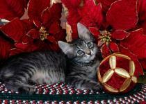 новый год с животными, подмосковье