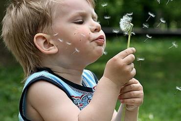 Аллергия на расстения