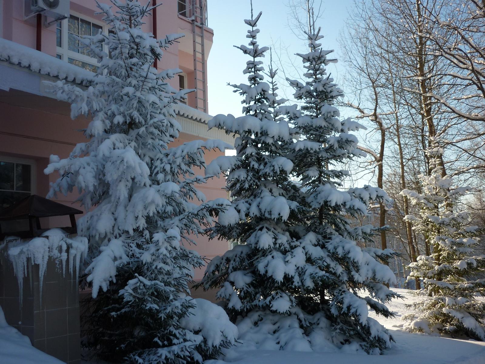 Новый год пансионаты санатории подмосковье