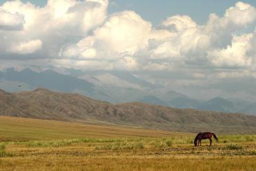 Изображение - Лечение суставов в казахстане 4935